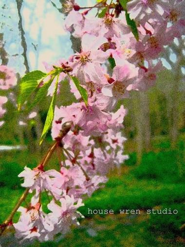 Cherry-filmgrainblg