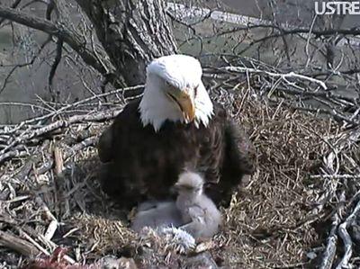 Eaglet28