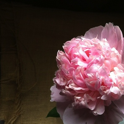 Firstpeony