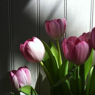 Tulipssix