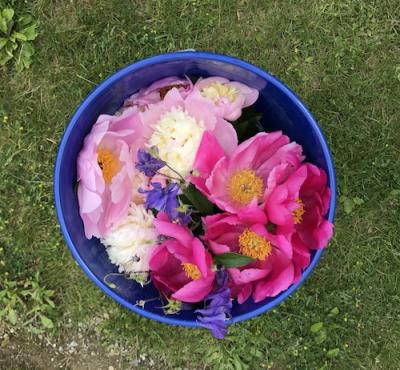 Patsflowers
