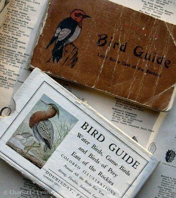 1birdguidebooks